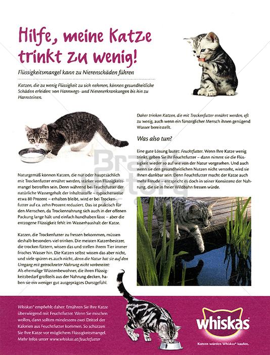 Whiskas Hilfe Meine Katze Trinkt Zu Wenig Flüssigkeitsmangel